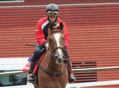 IMG_5804 Max Friberg on Red Pearl