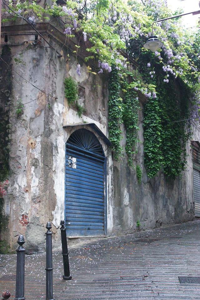 Wysteria over Blue Door Genova, Italy