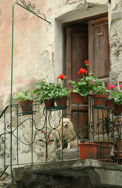 Dog on Porch Manarolla, Cinque Terre, Italy