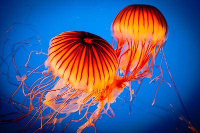 Stanley Park Aquarium, Vancouver, British Columbia, Canada