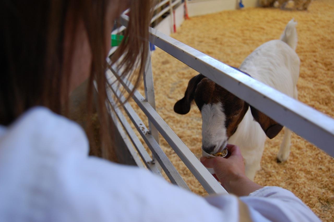 Cali Feeding a Goat - Great State Fair of Texas