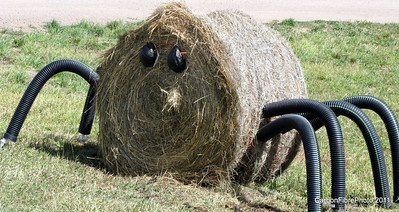 A very scary hay bale