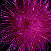 Stereo Flowers thistle right
