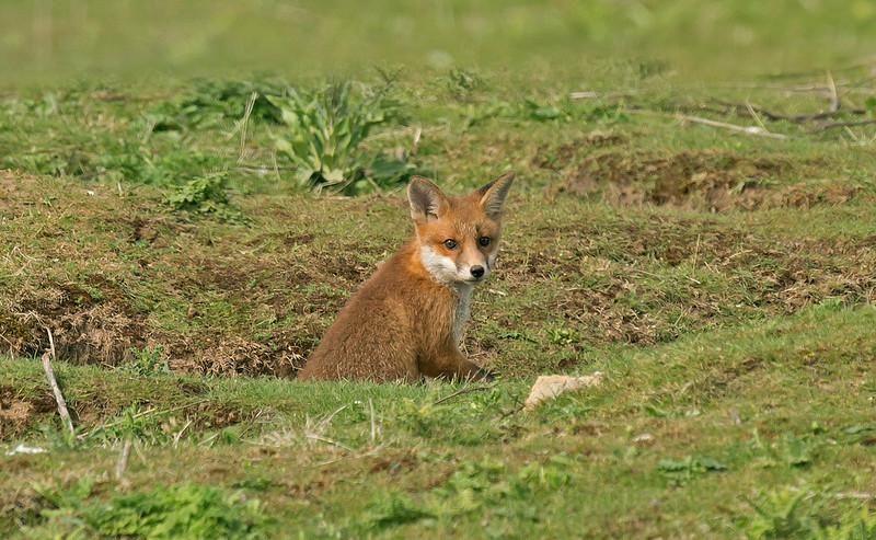 Fox 6