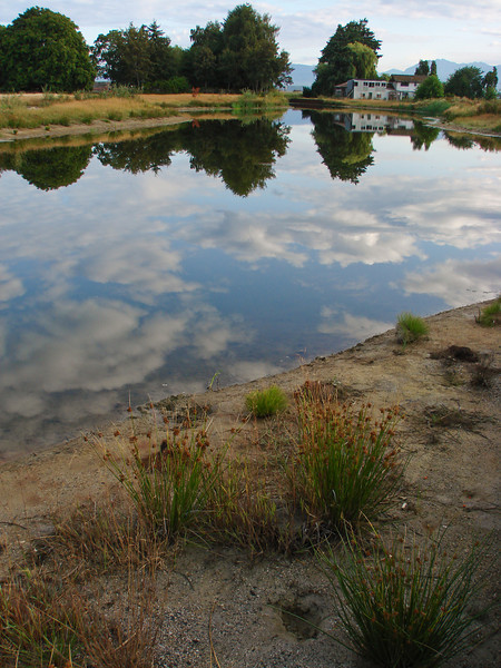 Reflections in Terra Nova Rural Park in Richmond, BC, Canada.