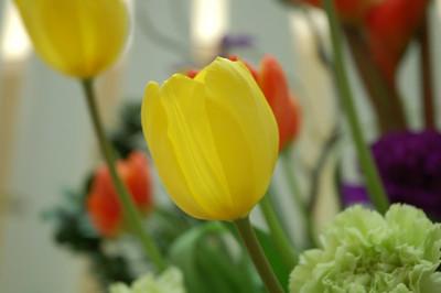 Canaan Flowers 06.04.09