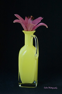 Purple Lilly in a Yellow Bottle
