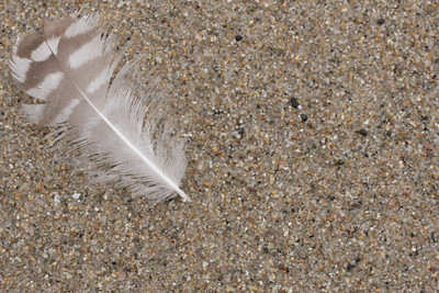 JUST A FEATHER IN THE SAND... Hermosa Beach, California, 2008