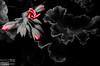 My perennial favorite, geranium buds.