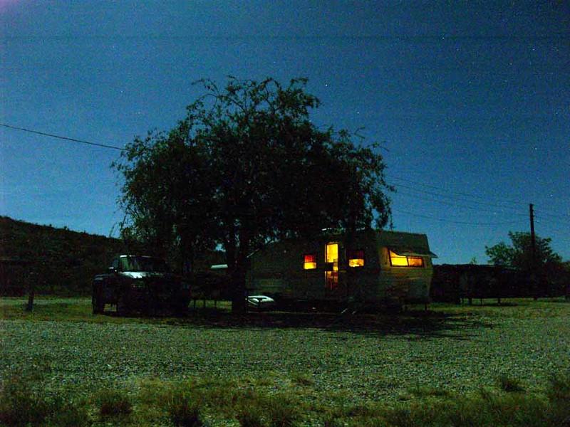 Lone Palm Under Moonlight