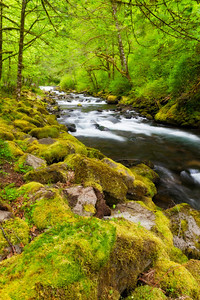 Tanner Creek, Columbia River Gorge