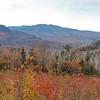 White Mountain Birch