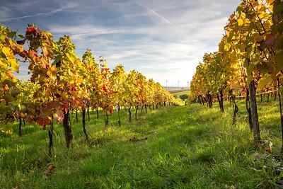 Vineyard sunset, Burgenland, Austria