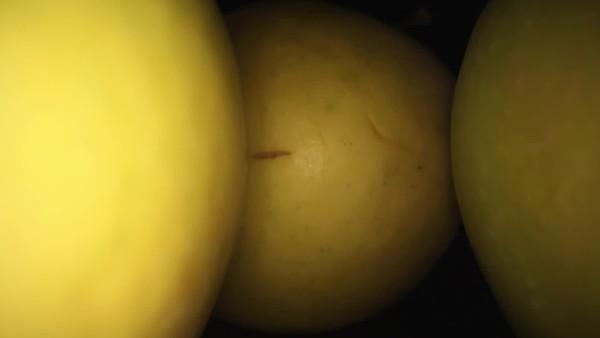 V1-0005_apple core