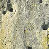 detail of the surface of one of the stones at Stonehenge in England, showing prehistoric bore holes