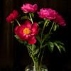 Peonies in vase #1
