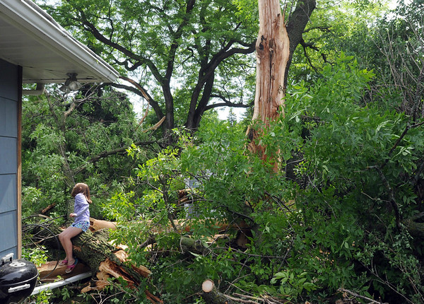 Macy Weller, 8, looks at tree limbs after lightning struck a tree in her granfather Don Weller's backyard in Mankato early Wednesday morning. Part of the tree was embedded in a neighbor's home. Photo by Pat Christman
