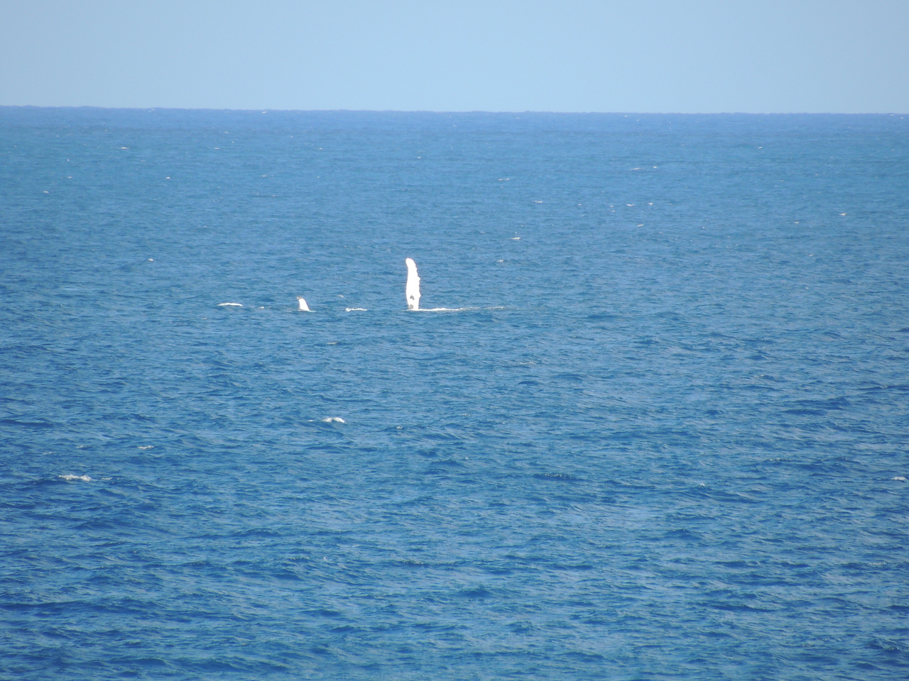 Whale fluke in straights of magellan