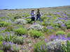 SCA Team Members Terry and Becky at Tule Ridge with the BLM Carson City Field Office, during the summer of 2005.