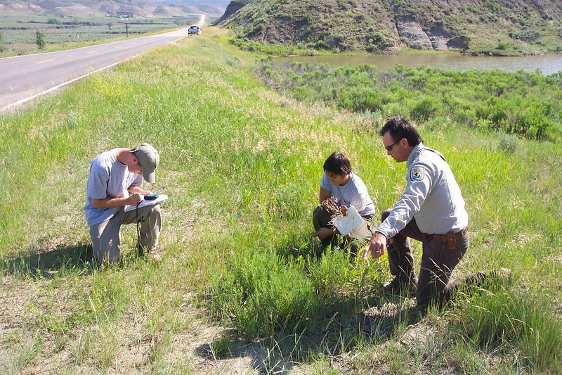 SCA Team Members get help identifying roadside plants with the BLM Lewistown Field Office during the summer of 2005.