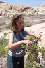 SCA Team Leader Sarah Hunkins working on seed collection with the BLM Las Vegas Field Office, summer 2004.