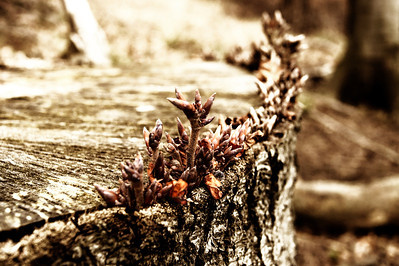 New Life Neues Leben   creativecommons - by-nc-nd