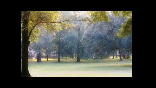 Joy Video  2012
