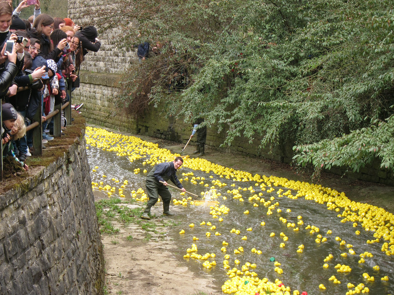 Duck race 2013