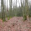 Hike: Wilwerwiltz - Kautenbach