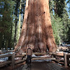 Next to earth's biggest tree. 2200 years old! (the tree)