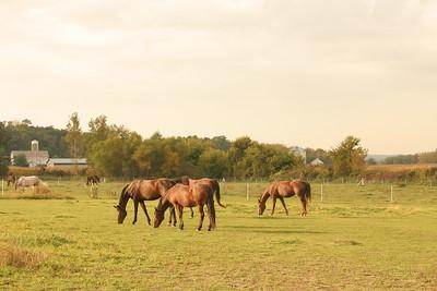pretty pasture #2