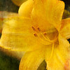 Artful Yellow Lily
