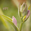 Hopeful Bud