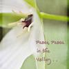 White Trillium..Peace!
