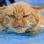 swim cat