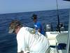 m fish 2
