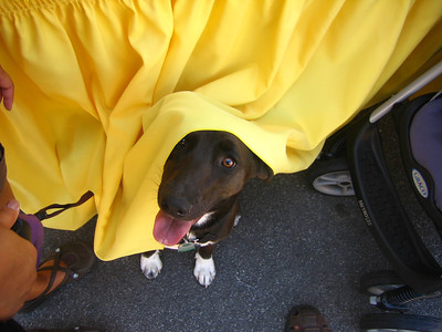 Lucy takes cover from the hot sun at the Duck Derby.