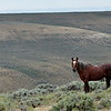 Wild Horse, Green Springs BLM, Wyoming