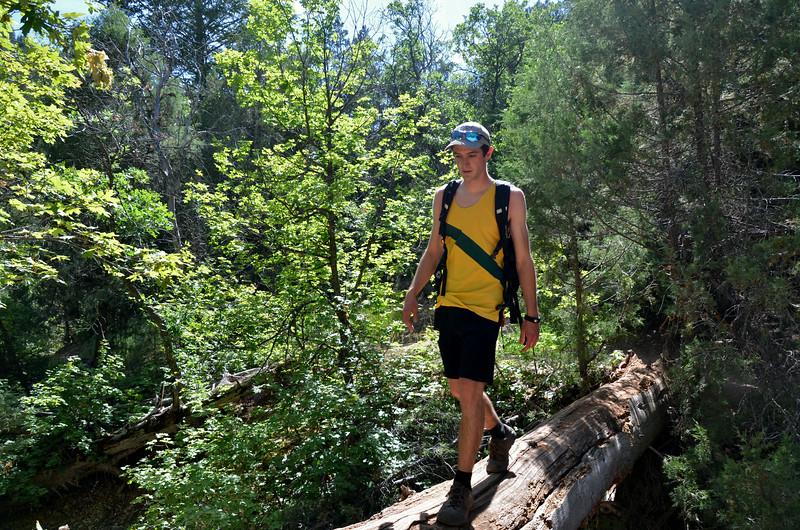 Uinta National Forest Hike