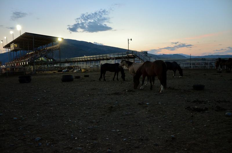 Rodeo Horses, Wyoming