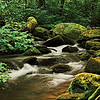 Mountain Stream, Joyce Kilmer National Forest