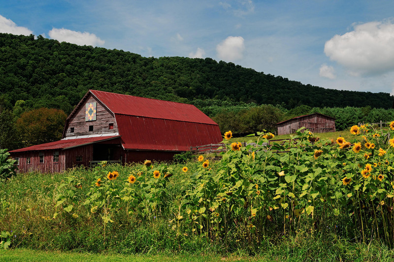 Barn and Sunflowers, West Jefferson