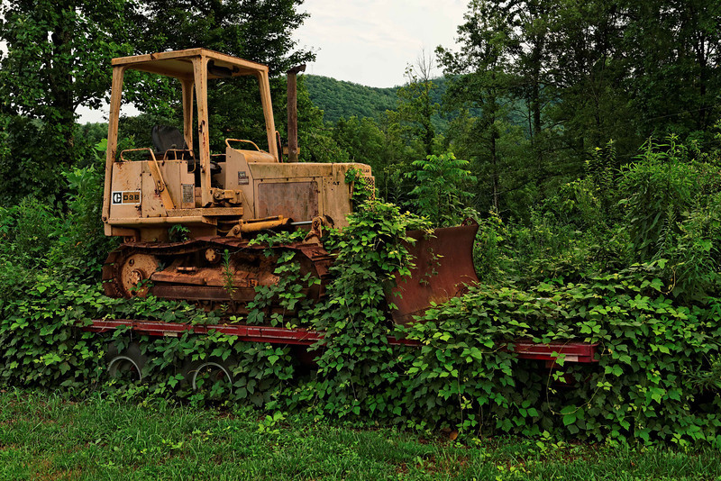 Kudzu vs. Caterpillar, Brasstown, NC