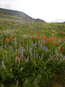 Wildflowers on the hike to Cecret Lake.