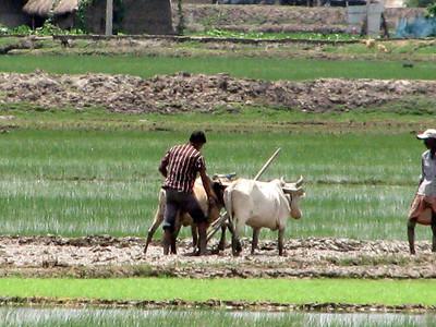 Sundarbans Project July 2013