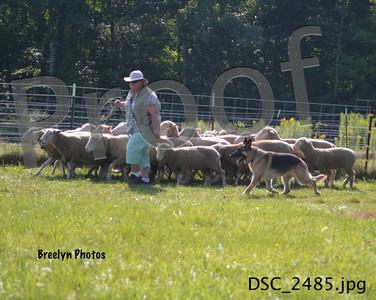 Sunday GSDCSNH Herding Aug 10, 2014