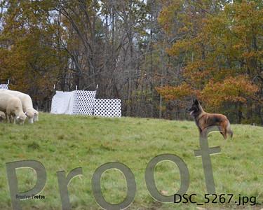 Sunday Oct 26 Herding GSDCCM