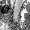 Baby Robins!