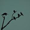 Memphis, TN May, 2012. The Birds ( Byrds )