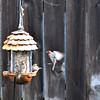 Flight and feeder